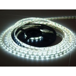 LS 60LED SMD3528 4,8W 300Lm Cold White 12V (IP65 by drip gum)